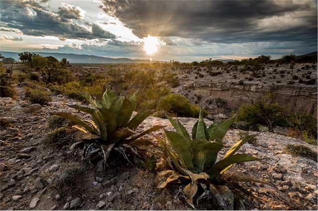 Reserva de la Biósfera de Tehuacán será patrimonio mixto mundial