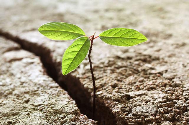 Resiliencia, la habilidad de enfrentar las adversidades de forma positiva