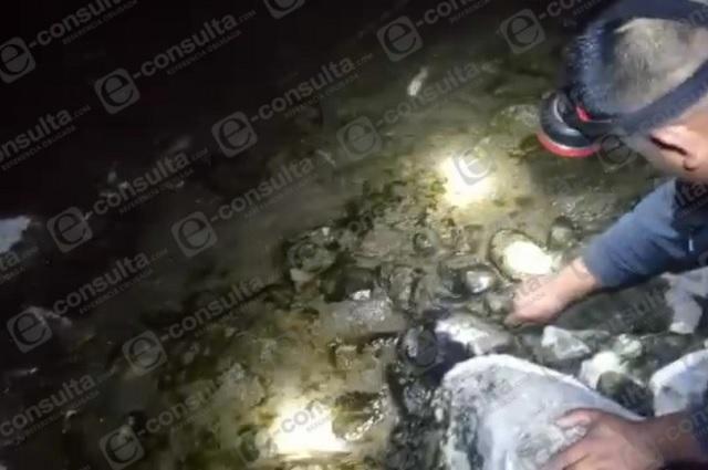 Envenenan río en Cuetzalan para extraer camarones