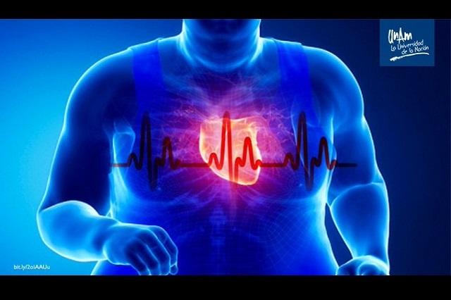 Alteración de los ritmos cardiacos contribuye a la obesidad