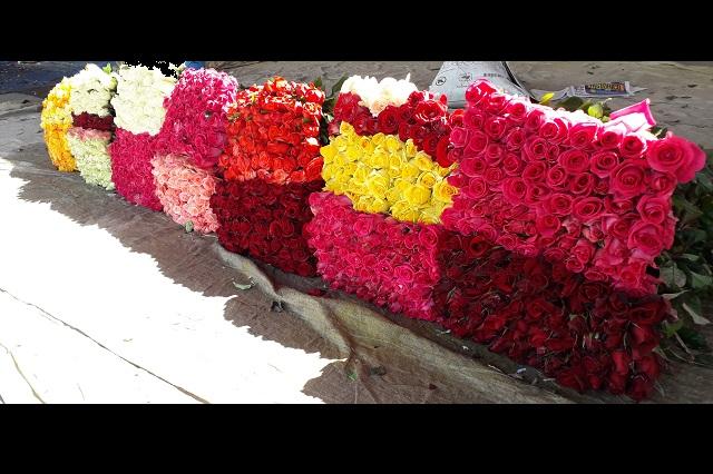 Productores de flor de Atlixco cosechan rosas para este 10 de mayo
