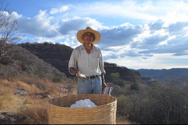 Cae en decadencia la producción de sal en Chila