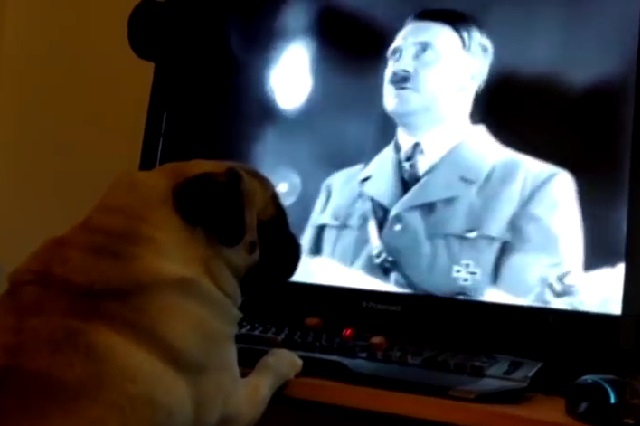 Arrestan a hombre por enseñarle a su perro saludo nazi