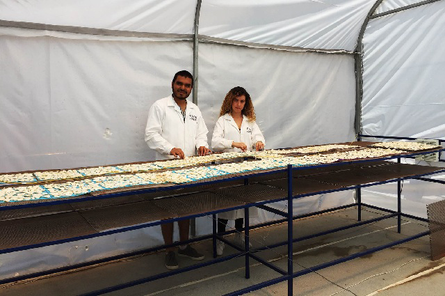 Proponen convertir invernaderos en secadores solares de alimentos