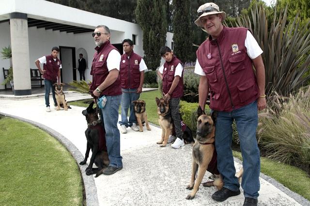 Presenta SEDIF a perros que ayudan a niños discapacitados