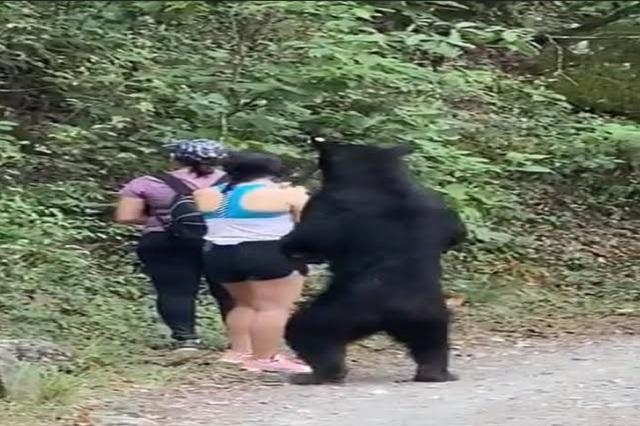 Video: Mujer se toma selfie con oso que la intenta morder