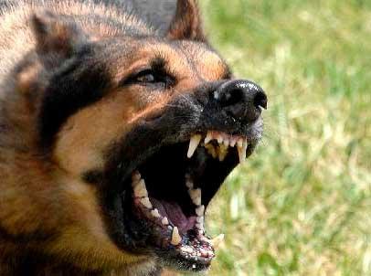 Multa de 350 mil pesos por pasear perros sin bosal en Puebla