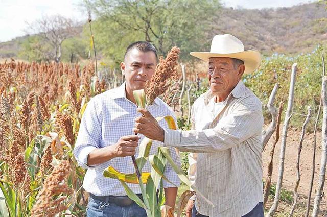 Aumenta interés de China por importar sorgo mexicano, informa SAGARPA
