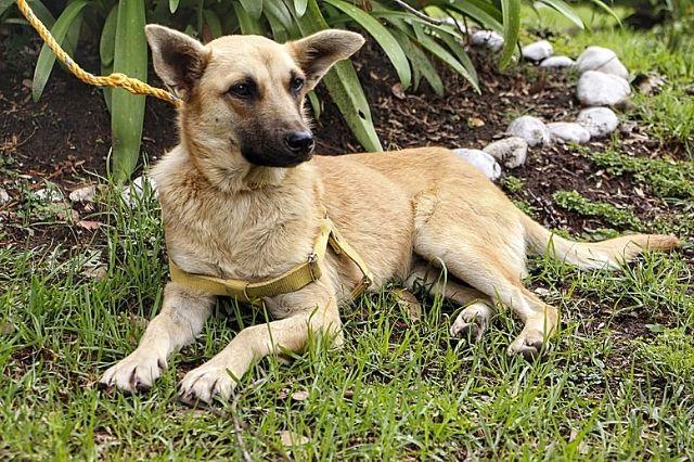 Ponen en adopción a Spike perrito rescatado del socavón
