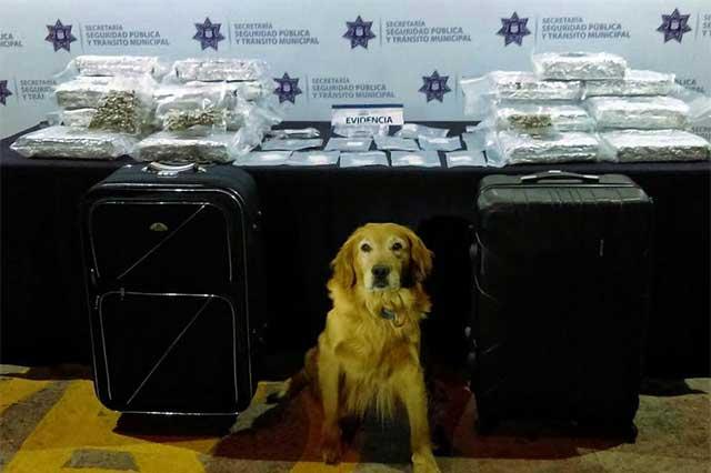 Detienen en la CAPU a pasajero con 16 kilos de marihuana