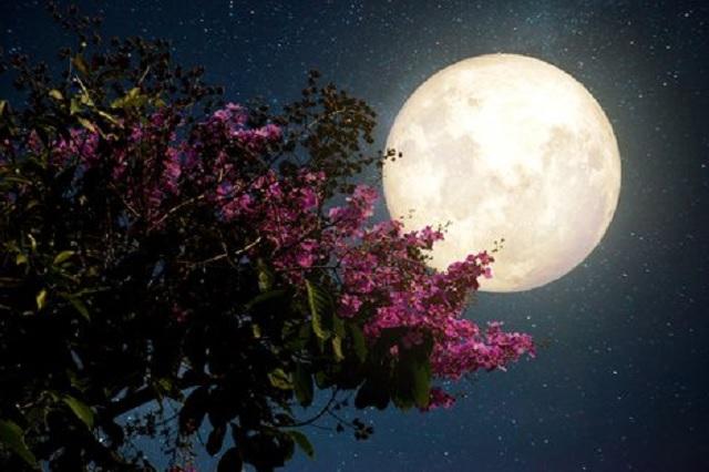 Superluna de mayo será la última del 2020: ¿cuándo y dónde verla?