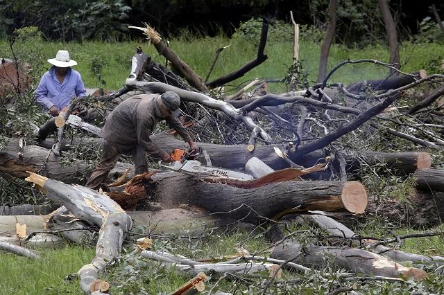 A través de change.org poblanos exigen parar tala en Cuautlancingo