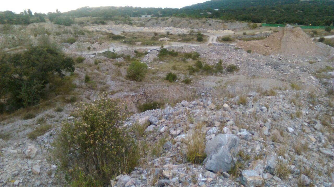 En Bosques de Chapultepec tala ilegal pese a queja ante Semarnat