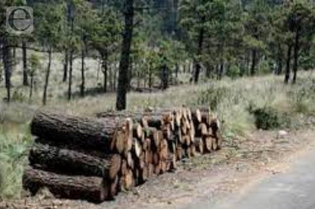 Controla el 'narco' tala ilegal de bosques en 4 estados
