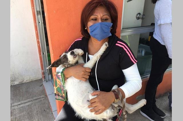 Atlixco trabaja por tenencia responsable de animales