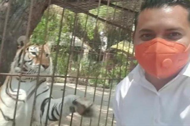 Tigre agrede con zarpazo a candidato de Movimiento Ciudadano en Tehuacán