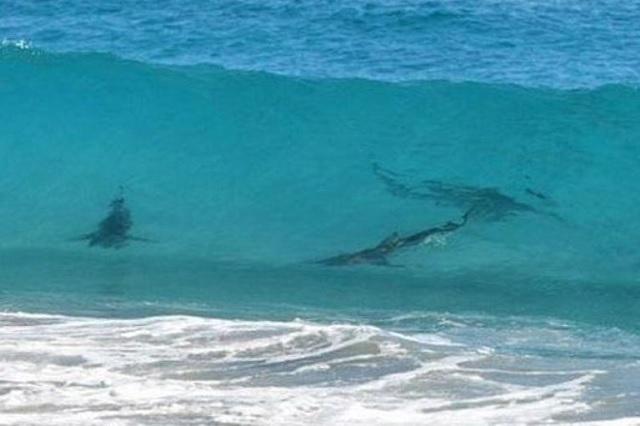 Tiburones resguardan playa en Cancún; los captan nadando cerca de la orilla