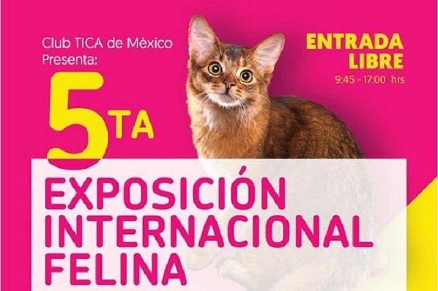 UPAEP será sede de la 5ª Exposición Internacional Felina