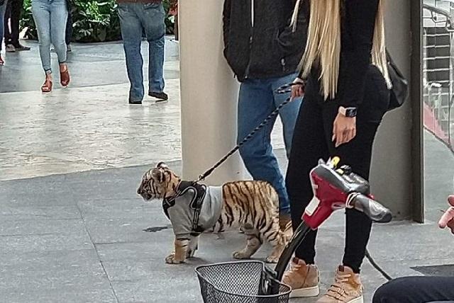 Mujer pasea con un tigre de bengala en centro comercial