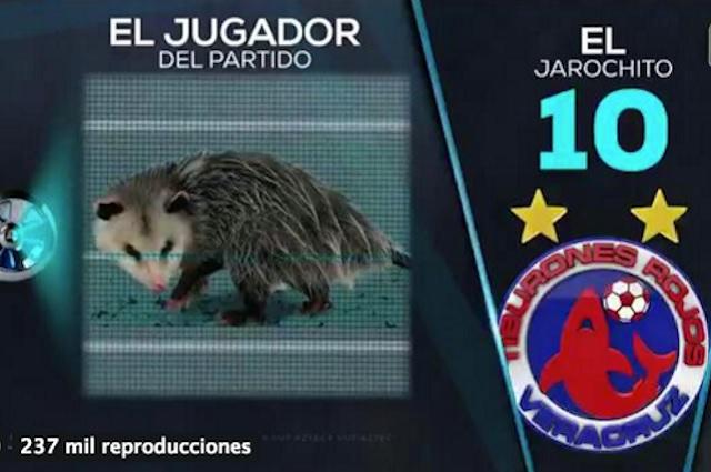 Tlacuache se roba el show en el partido Puebla-Veracruz