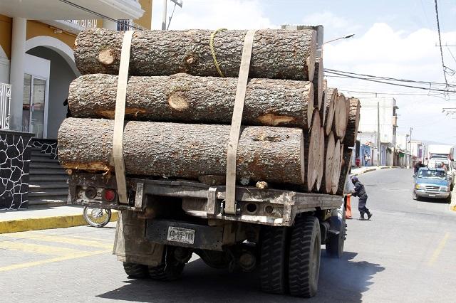 Proponen ley para elevar en Puebla castigo a talamontes