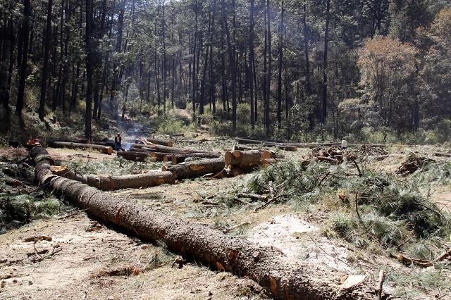 Proponen policía en Puebla contra tala y contaminación