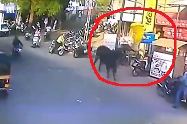 Mujer es brutalmente embestida por un toro de 900 kilos