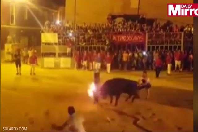 Graban el suicidio de un toro al que le prendieron fuego en sus cuernos