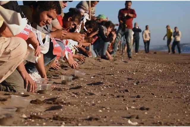 Liberan más de 200 mil tortugas marinas en peligro de extinción