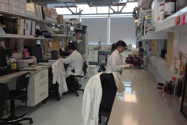 Desarrollan INAOE y BUAP aplicaciones para tratamientos médicos