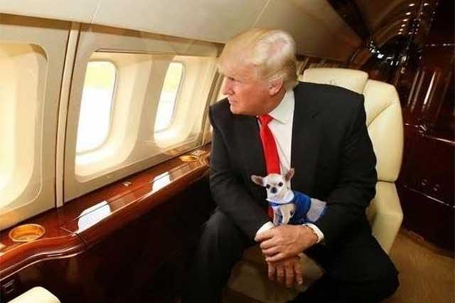 Trump sufre otra derrota y se queda sin presupuesto para el muro