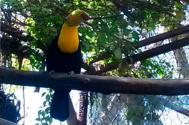 Martín Camacho librará acusación por tráfico de especies, esperan
