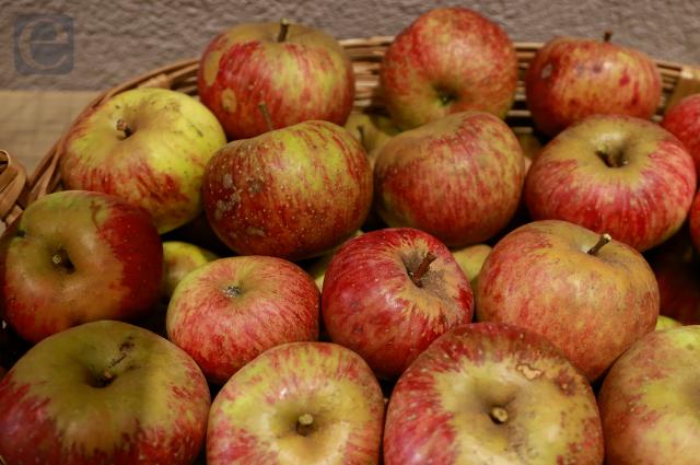 Puebla es principal productor de pera y manzana del país