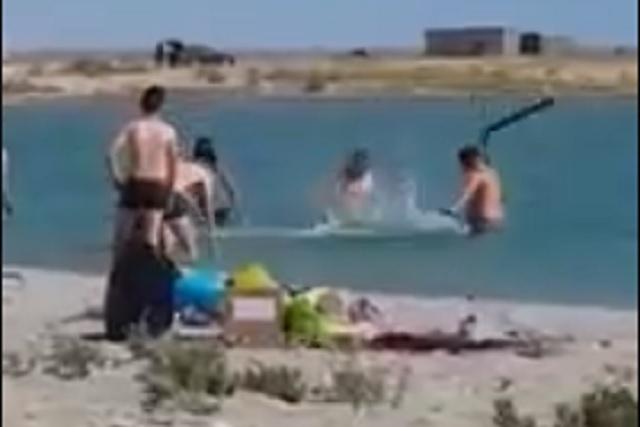 Turistas golpean y matan a foca para tomarse una foto con ella