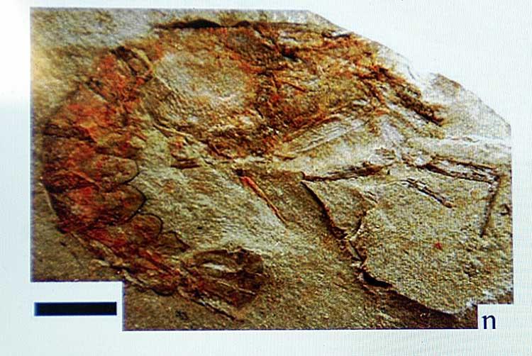 Descubren fósiles de hace 120 millones de años en Tehuacán