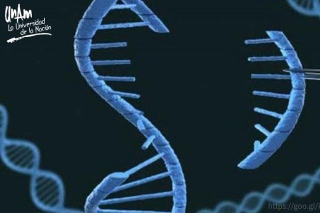 Inadmisible, la edición genética de embriones humanos: UNAM