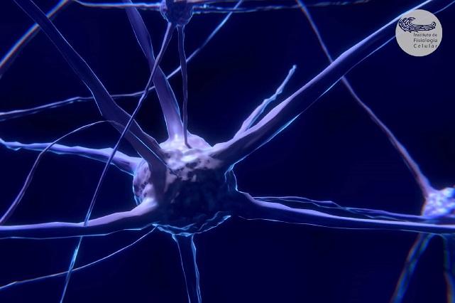 Nuevos caminos para entender mejor la epilepsia