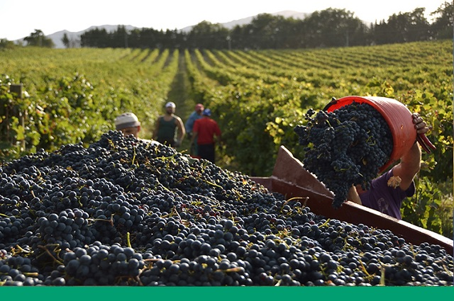 Recorte histórico a programas de comercio agropecuario en el país