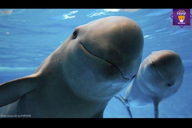 Proyecto para preservar la vaquita marina gana en Ocean Hackathon 2020