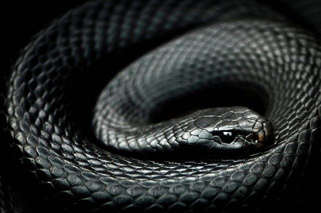 Premian antiveneno contra mordeduras de serpientes