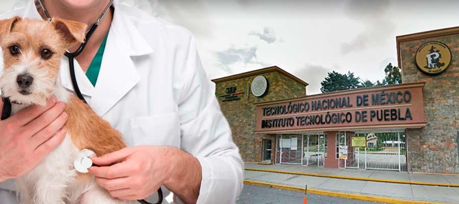 Hasta veterinarios dirigen a los 26 tecnológicos de Puebla