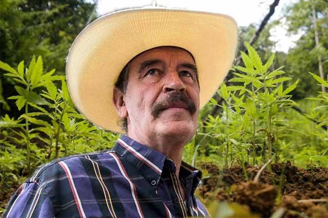Fox vaticina que la marihuana será legal en México dentro de un año