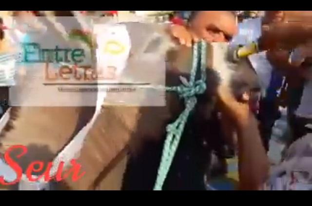 Video: Mujer le da cerveza por la nariz a un burro y la tunden en redes
