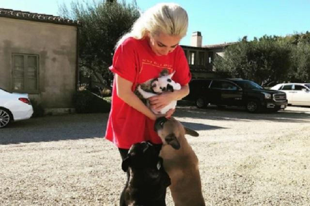 Video: Así fue cómo le robaron sus mascotas a Lady Gaga