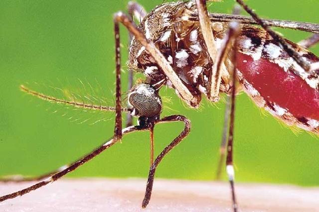 Avanza a 160 el número de casos de infectados con el virus del Zika