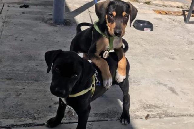 Volkswagen contrata a dos cachorros de la calle como vigilantes
