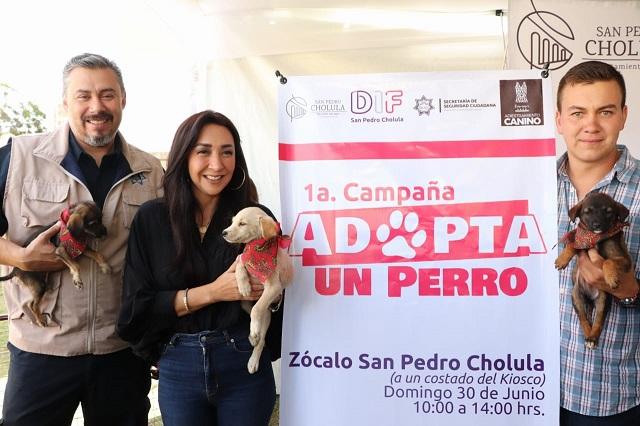 Ofrecen en adopción canes callejeros y entrenamiento, en San Pedro Cholula