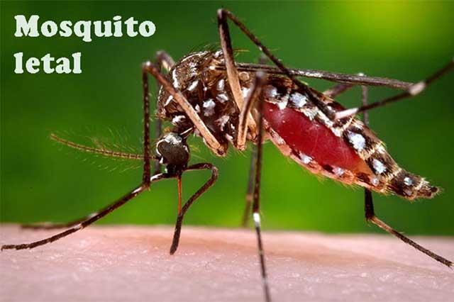 México, con la guardia en alto por virus de zika