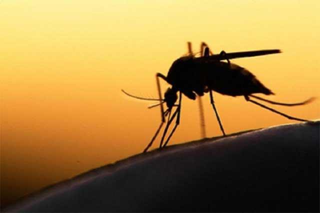 Oaxaca, segundo lugar en casos identificados de virus del Zika
